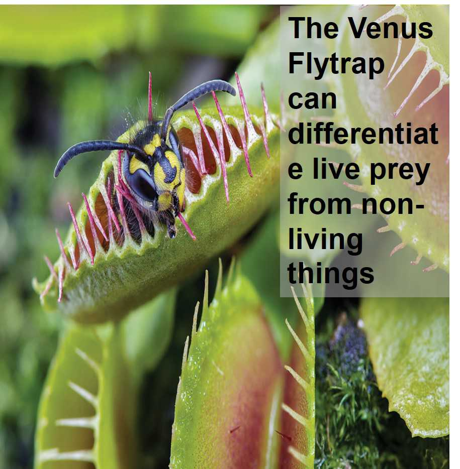Class 1 Living & Non- Living Things - Fact