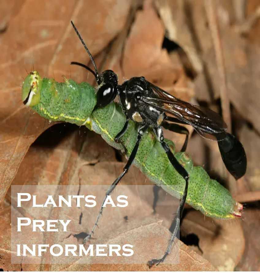 Class 1 Plants - Fact