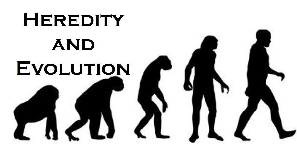 Class 10 Heredity And Evolution - Fact