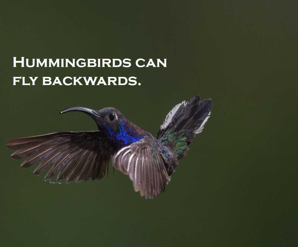 Class 3 Birds - Fact