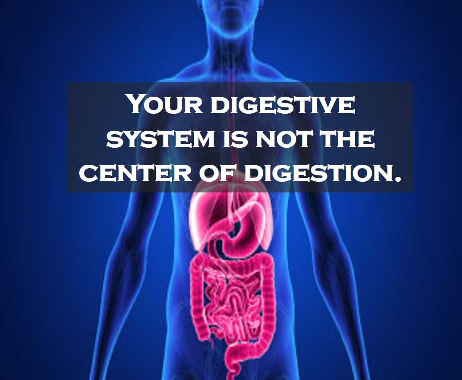 Class 4 Food And Digestion - Fact