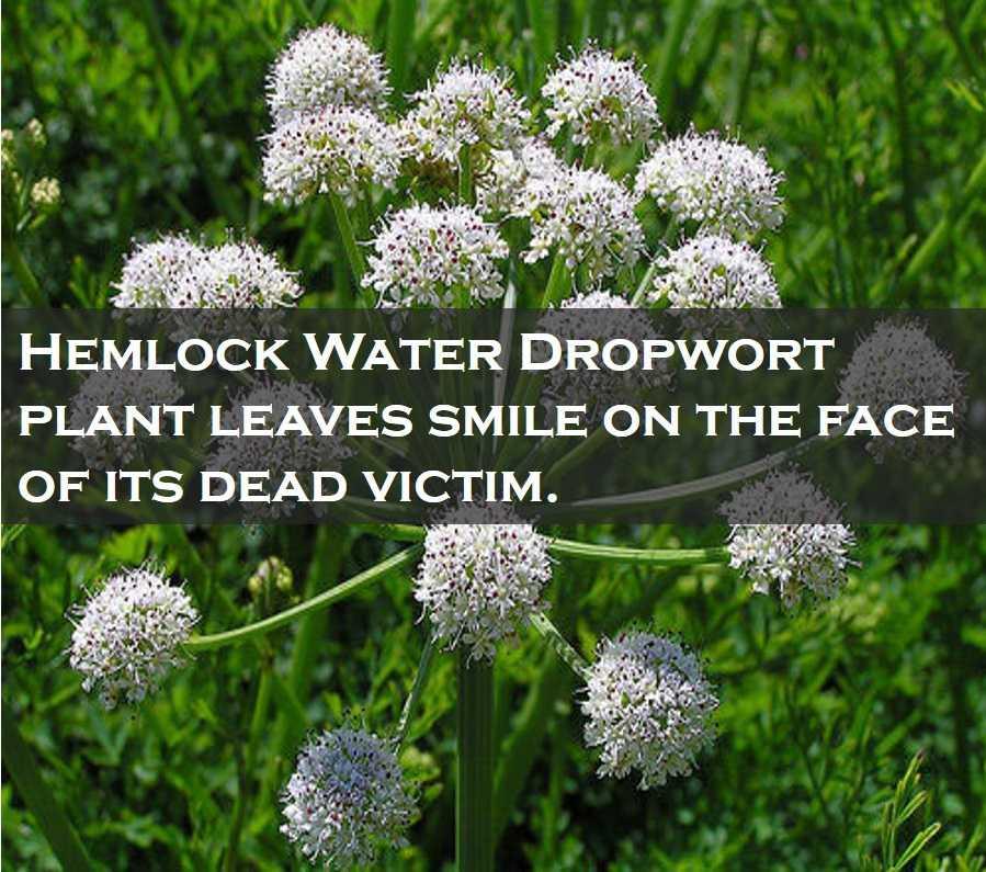 Class 4 Plants - Fact