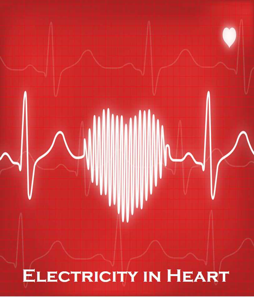 Class 6 Electricity And Circuits - Fact