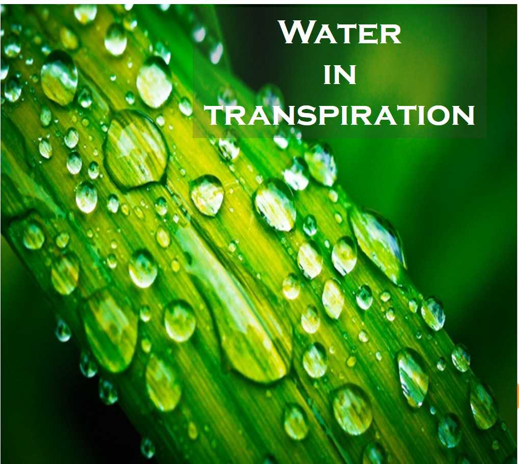 Class 7 Transportation In Plants - Fact