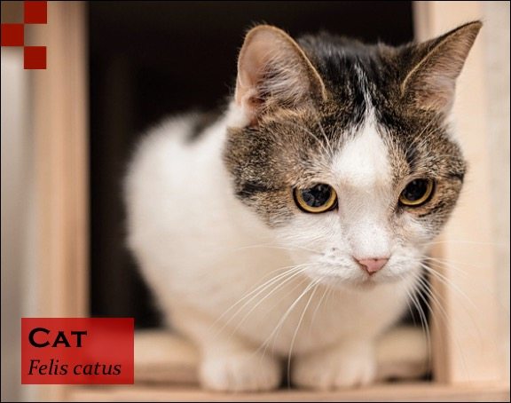 Scientific Name of Cat - Felis catus