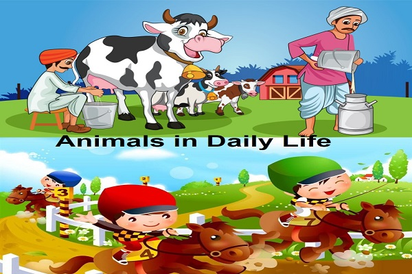 Example of Animals in daily life