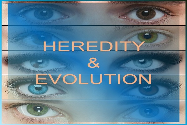 Example of Heredity and Evolution? in daily life