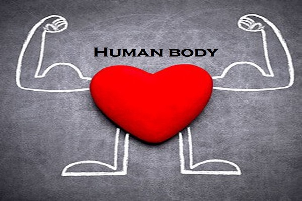 Example of Human body in daily life