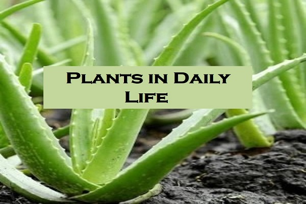 Example of Plants in daily life