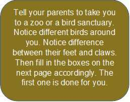 Birds - Lesson for Class 3