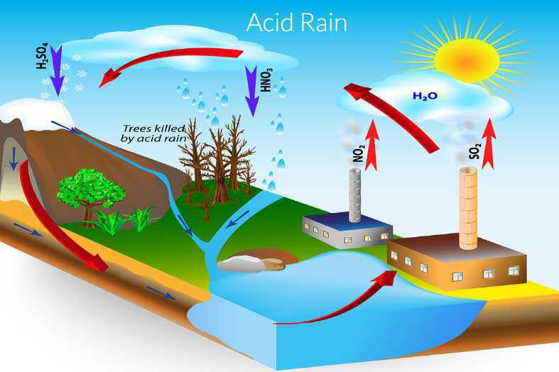 Science Class 7 Acids, Bases and Salts Acid rain