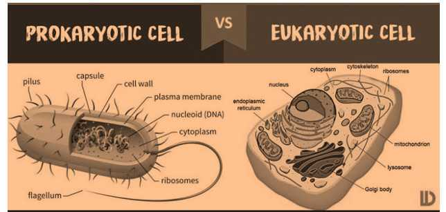 Science Class 8 Cell eukaryotic cells