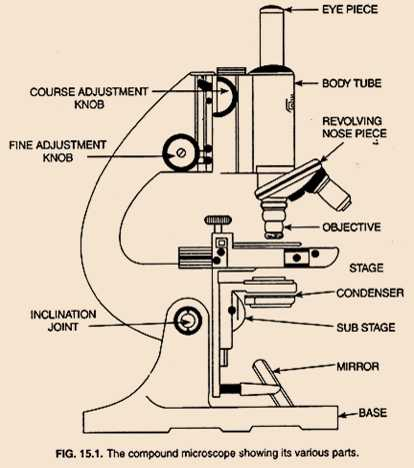 Science Class 9 Cell - The Fundamental Unit of Life Compound Microscope