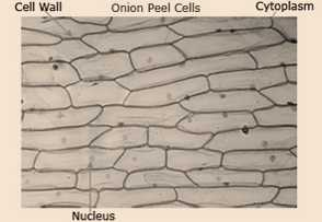 Science Class 9 Cell - The Fundamental Unit of Life Cell Structure