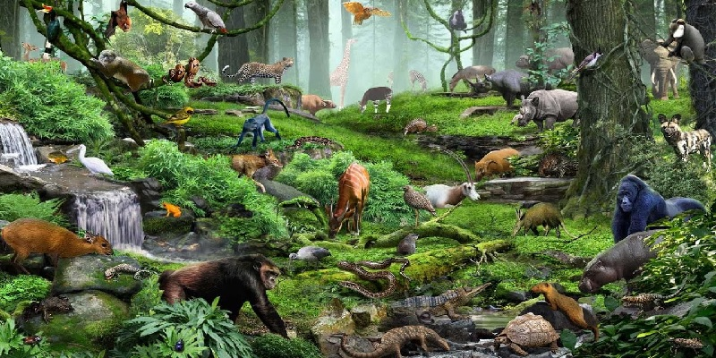 Living Organisms and their Surroundings
