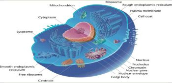 Cell- The Fundamental Unit of Life