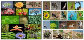Conservation of Plants and Animals